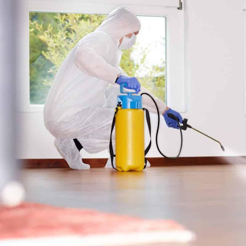 Dératisation désinsectisation désinfection – services associés – Sernet